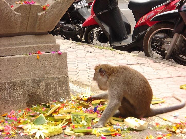 Macaque monkey in Ubud, Bali