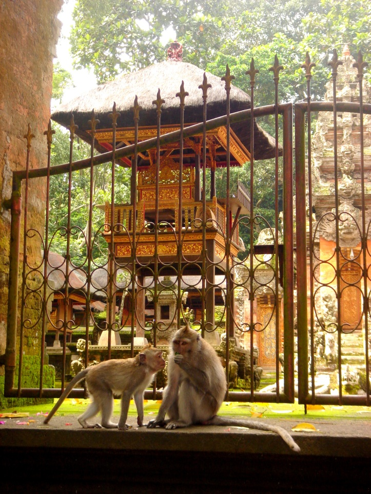 Macaque monkeys in Monkey Forest, Ubud Bali.