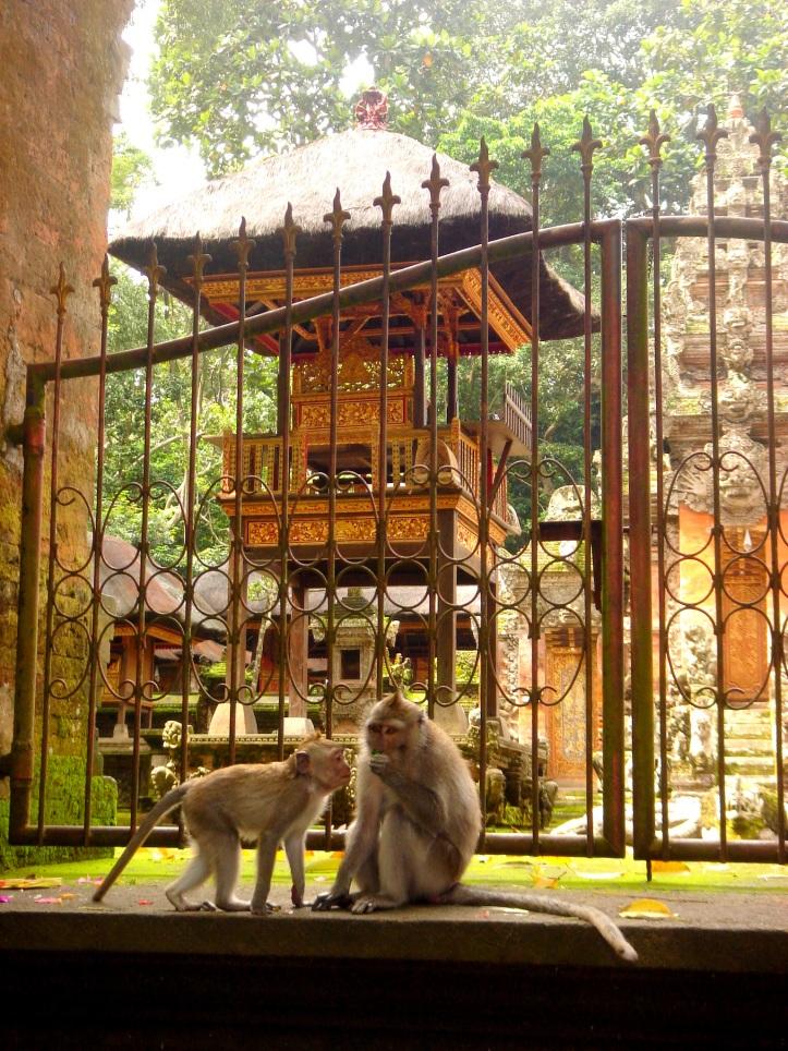 Macaque monkeys in Monkey Forest, Ubud Bali.